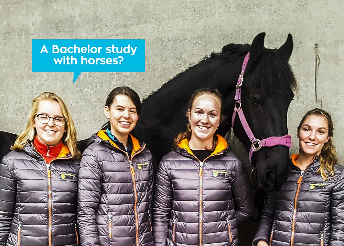 /images/pages/VHL_Bachelor_Equine_Sports_Business.jpg